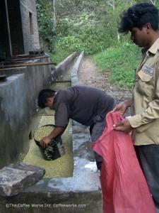 Miraflor: washing & bagging